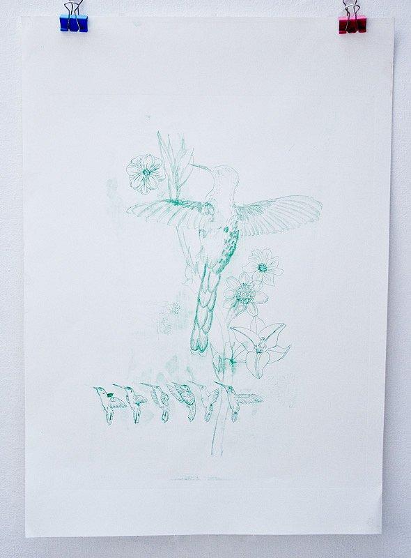 hummingbird lithograph